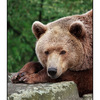 Big Bear - Germany