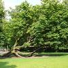 P1000878 - Vondelpark
