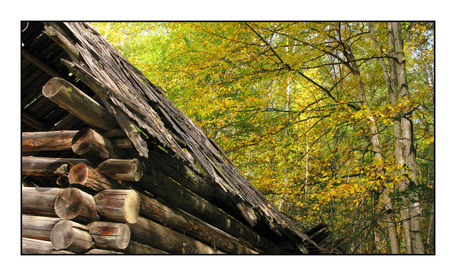 Log House in Autumn Abandoned