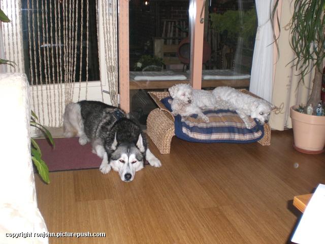 Whitney en Cindy en Cas 14-10-08 In huis 2008