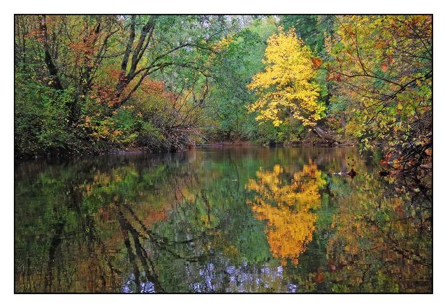 Tsolum River Landscapes