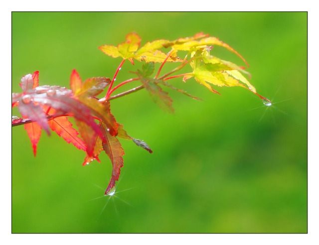 Backyard Droplets 2012 - Close-Up Photography