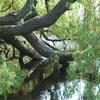 vondelpark 127 - Vondelpark