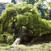 vondelpark 187 - Vondelpark