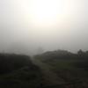 View2 - Nature calls