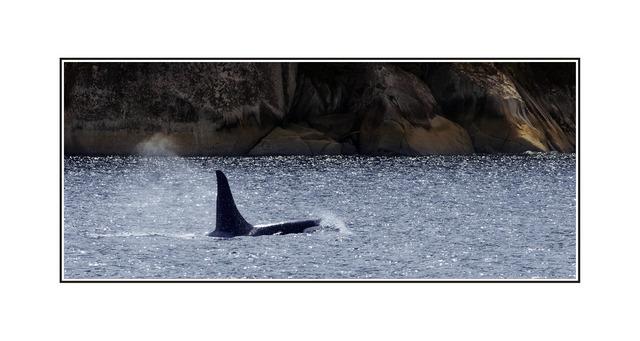 whale01 Wildlife