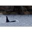 whale01 - Wildlife