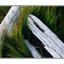 driftwood in green - 35mm photos