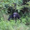 IMG 0283 - Kenya