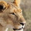 IMG 0631 - Kenya
