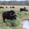 IMG 1364 - Kenya