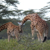 IMG 1410 - Kenya