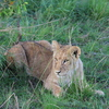 IMG 2125 - Kenya