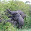 IMG 2228 - Kenya