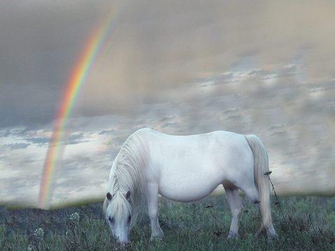 Duga - Page 3 White-horse-Rainbow