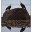 Eagles Reflection - Wildlife