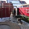 Tuin - aanleg pleintje en m... - Aanleg van 't Rietplein 06-...