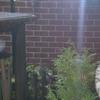 Tuin 30-11-08 vlaamse gaai - In de tuin 2008