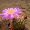 P1030508 - Cactus