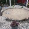 Buxus planten 't Rietplein 08-03-13