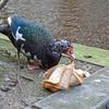 P1300511 - de vogels van amsterdam