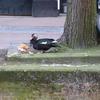 P1300513 - de vogels van amsterdam