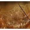 Morning Web - Close-Up Photography