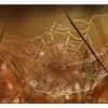 Morning Web - Close-Up Photography