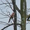 P1260918 - de vogels van amsterdam