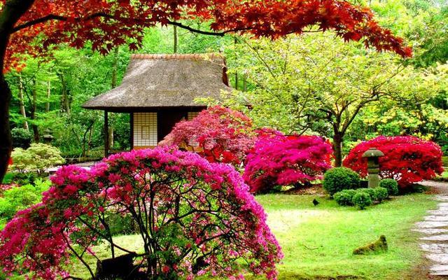 Čarobni vrt 12773619
