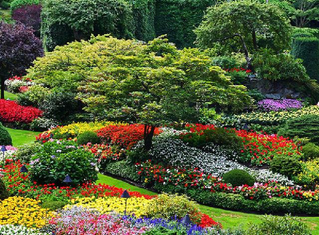 Čarobni vrt 12773624