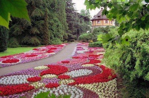 Cvijeće oko kuće  - Page 2 12868229