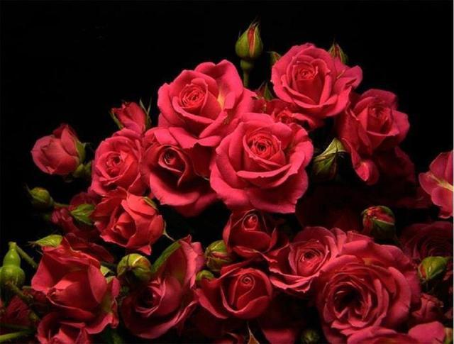 Ruže - Page 2 12884184