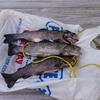 fqaw352y2g - fish