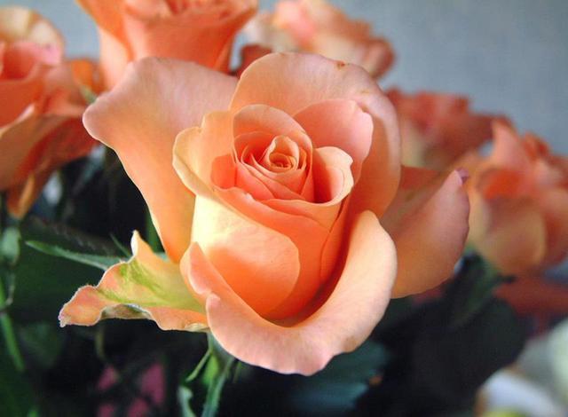 Ruže - Page 2 13043939