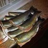 4232153-2 - fish