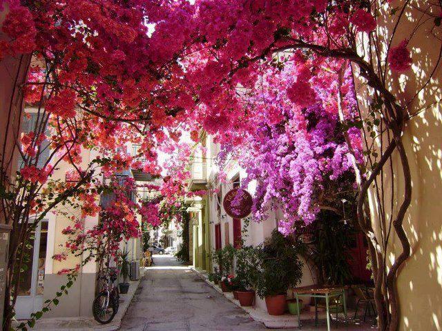 Cvijeće oko kuće  - Page 3 13125589