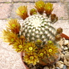P1060884 - Cactus