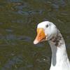 P1310757 - de vogels van amsterdam