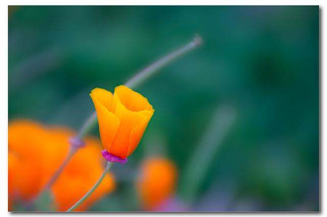 4593972683 b389537666 o flower