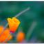 4593972683 b389537666 o - flower