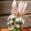 P1060924 - Cactus