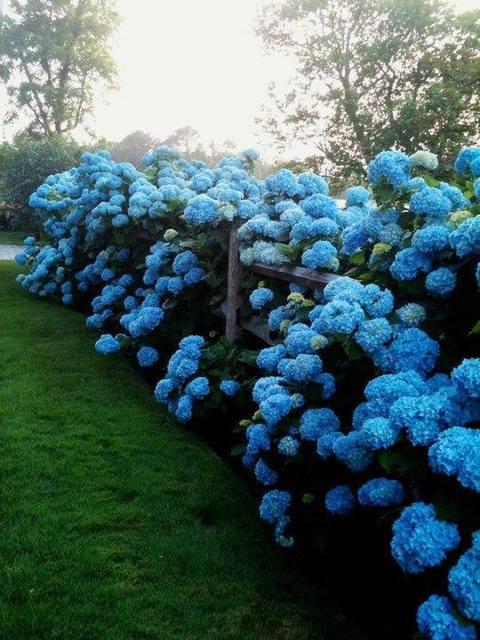 Cvijeće oko kuće  - Page 3 13269719