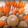 P1060953 - Cactus