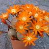 P1060964 - Cactus