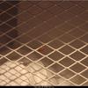 Lieveheerstbeestje in de wi... - Nature calls