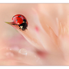 Ladybug 01 - Close-Up Photography