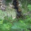 Tuin 17-06-13 2 - In de tuin 2013