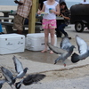 IMG 5035 - Pigeons - June of 2013 (Nor...