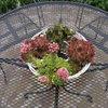 Tuin - nieuwe lantaarnplaal... - In de tuin 2013